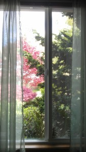 The view of the garden through my window.