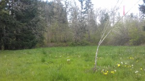 A peaceful meadow. I remember how easy it was as a kid to just flop down in the grass without reservtions.