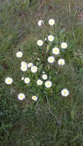 Little meadow flowers.