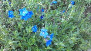 Some blue flowers.