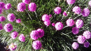 Even humble chives show their best colors in the afternoon sunshine.