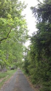 ...walking a serene path.