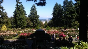 One small piece of our amazing world: The International Rose Test Garden in Portland, Oregon.