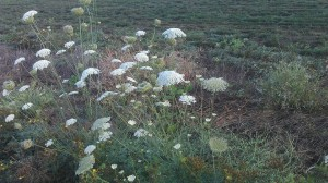 Changing seasons and roadside wildflowers as a metaphor.