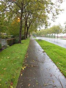 Debris strewn sidewalks challenge my balance.