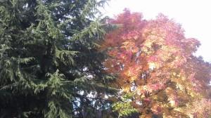 Autumn in suburban treetops.