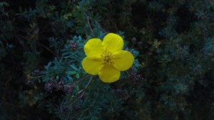 A single flower in autumn.