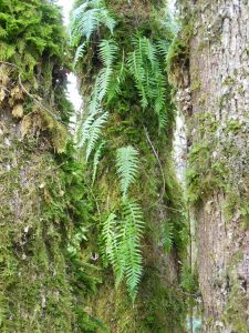 Ferns nestled between tree trunks.