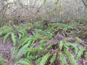 ...And more ferns.