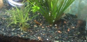 The secret life of shrimp.