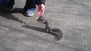 A recent, unexpected, moment of whimsy...and...squirrel!