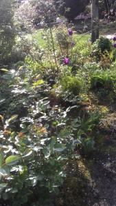 The garden on a spring morning.