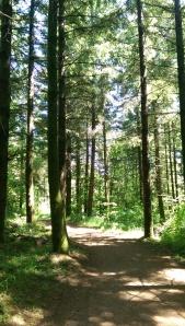 ...sun-dappled trails...