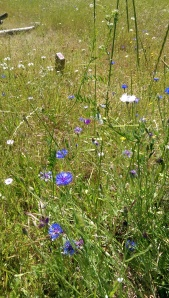 ...and lovely expanses of meadow filled with every possible wildflower.