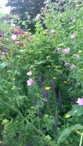 My garden in summer, a surprisingly fragile 'now'.
