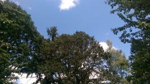 ...blue skies...