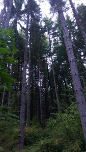 Forest: the view from my tent.