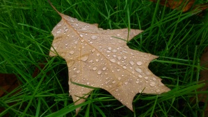 Autumn leaves, rainfall, green grass... there's got to be a metaphor here, somewhere.