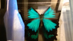 Like a butterfly; a birthday celebrates the growth of an entire year.