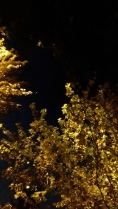 Illumination, or artificial lighting?
