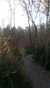Walking a winter path.