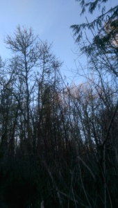Winter forest, winter sky - I see mostly what I expect to see, when I expect to see something particular.