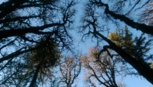Looking up; a common practice I use to shift perspective, and a lovely metaphor.