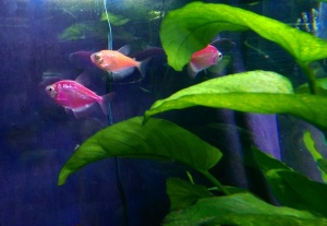 I sometimes feel a sense of being at home when I am sitting quietly, watching the fish in my aquarium.