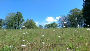 The journey is not all blue skies and meadows...but there are some blue skies and meadows to enjoy along the way.