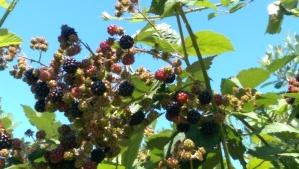 Summer berries, summer sky.