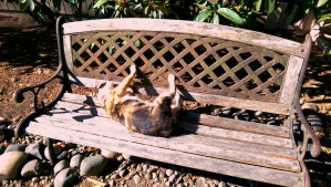 Cats have a good idea what to do with their leisure time.