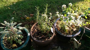 Time spent in tending the patio garden means fresh herbs for cooking, and a fresh perspective on the day.