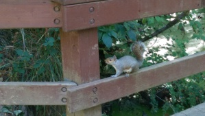 I take pictures of squirrels.