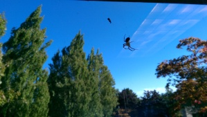 Perspective is a big deal; the spiders in life are not actually as big as they sometimes look.