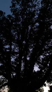 In my darkest moments, I find value in asking myself 'dark relative to what?'