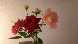 The last autumn roses from my patio garden.