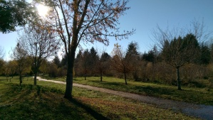 Before the cooking, a long walk in the chill autumn air.