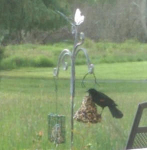Simple pleasures: birds at the feeder, a small container garden, a cloudy spring day.