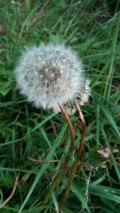 Like dandelion fluff, the past lacks substance, but can be a little distracting. :-)