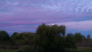 Pastel twilight, moon rising.