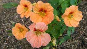 Not so very wild - still flowers. :-)