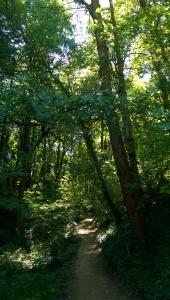 I set off through the trees.