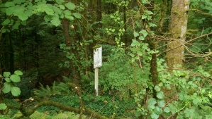Some of the exercise stations are well back into the trees, and quite overgrown.