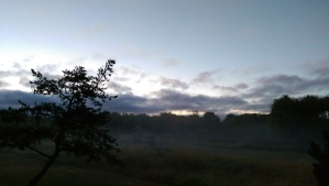 Low mist on the meadow before sunrise.