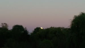 The day ended slowly, a pearl moon rising in a cotton-candy sky.