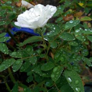 Love and raindrops