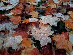 Autumn is a good season for choosing joy.