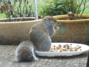 I invited a squirrel to visit. She hung around all day, and shared her wisdom.