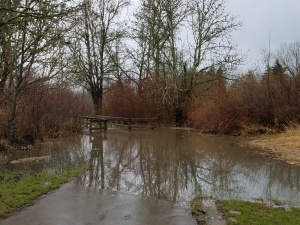 A favorite trail was flooded. It was necessary to choose another way.